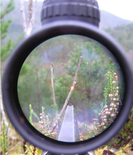 1-3-skudd-i-kvist